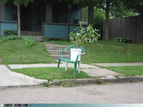 chair,chairturday,plant,seat,tree