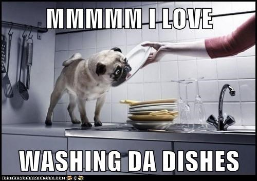dishwashers dogs lick plate pug - 6281608448