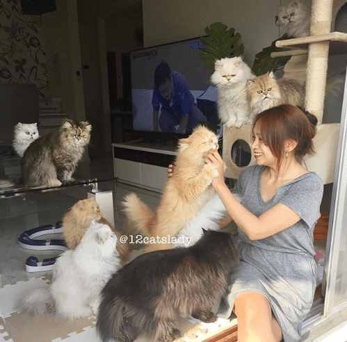 "crazy cat lady instagram twelve daily Cats - 6281733  This ""12 Cats Lady"" From Japan Posts Photo Delights on Instagram"