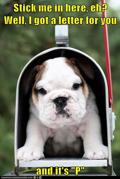 bulldog dogs letter mailbox pee puppy - 6281833216