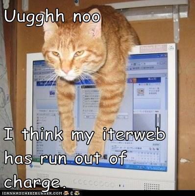 Cheezburger Image 6281992448