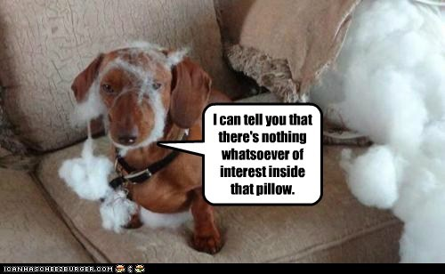 best of the week,dachshund,dogs,fluff,Hall of Fame,Pillow,stuffing