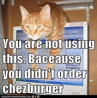 Cheezburger Image 6282239232