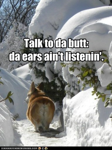 butt,corgi,dogs,not listening,snow