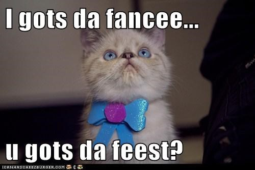 fancy,fancy feast,feast,food,hungry,oh you fancy huh