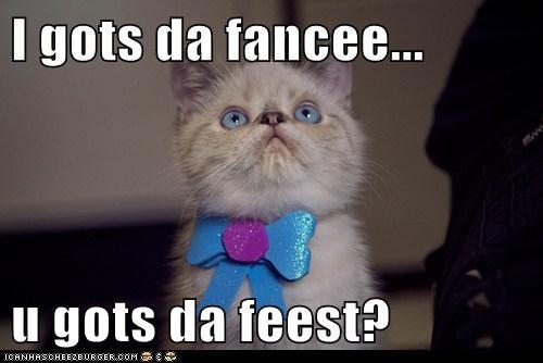 fancy fancy feast feast food hungry oh you fancy huh - 6282998272