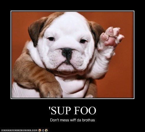 Sup Foo I Has A Hotdog Dog Pictures Funny Pictures Of Dogs