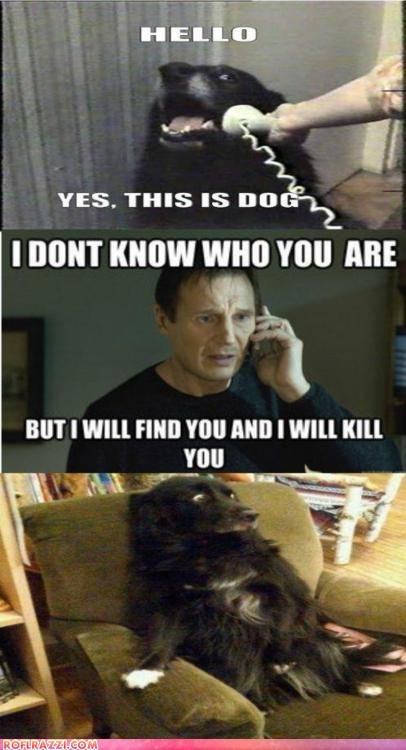 actor,best of the week,celeb,comic,dogs,funny,Hall of Fame,liam neeson,meme,Movie,taken