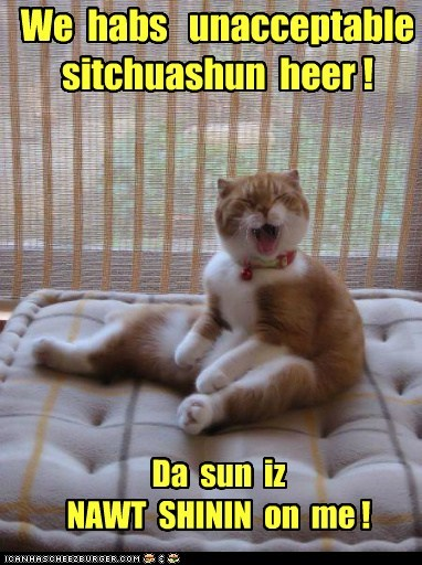 Cats,center of the universe,complain,lolcats,sun,sunlight,unhappy,whine