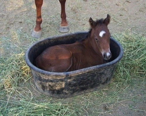 baby,bucket,foal,Hall of Fame,hay,horse,resting
