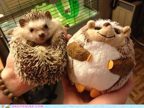 hedgehog rolled up spines squeep stuffed animal - 6283483648