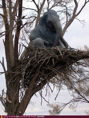 baby elephants birds nest tree wrong wtf - 6283551744
