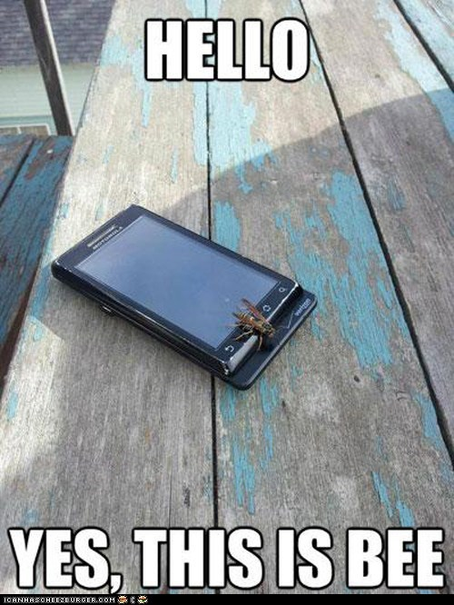 bees hello yes this is dog insects Memes phones - 6283712768