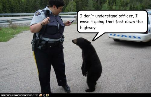 bear cub,cop,driving,highway,i dont understand,police officer,problem,pulled over,speeding,ticket