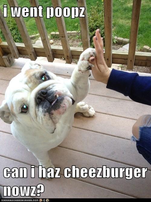 Cheezburger Image 6283946752