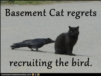 Basement Cat regrets recruiting the bird.