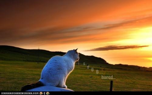 captions,sun,beauty,bored,Cats,stupid,sunset