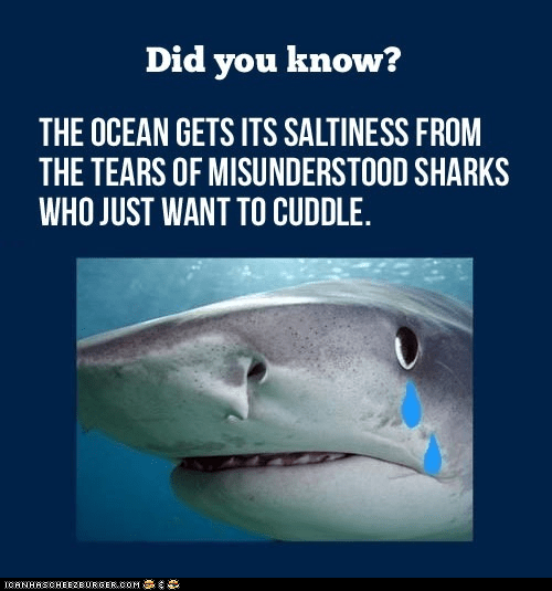 crying cuddles did you know false lies Memes misunderstood salty sharks tears