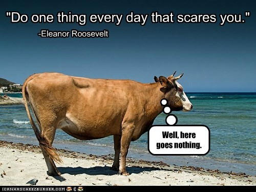 beach,cow,cows,eleanor roosevelt,fear,inspirational quotes,ocean,scary,swimming