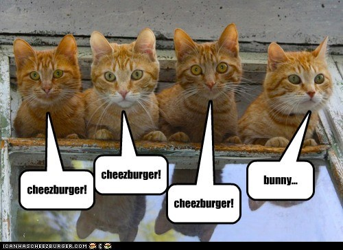 add bunnies bunny Cats c-c-c-combo breaker cheezburger cheezburgers distracted ignore lolcats on task - 6284448256