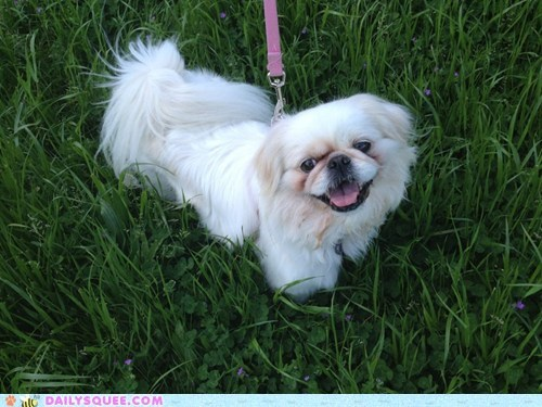 leash pet reader squee walk - 6284644864