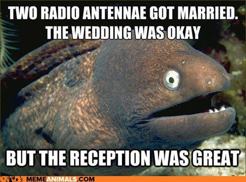 Bad Joke Eel,bad jokes,eels,jokes,Memes,puns,reception,weddings