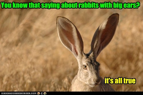 You know that saying about rabbits with big ears? it's all true