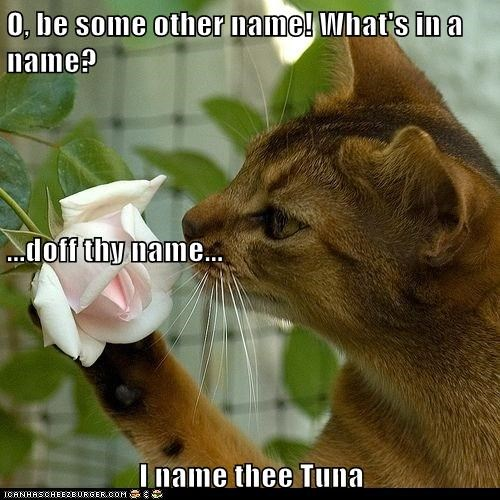 odor rose scent shakespeare smell sonnet sweet tuna - 6284913920