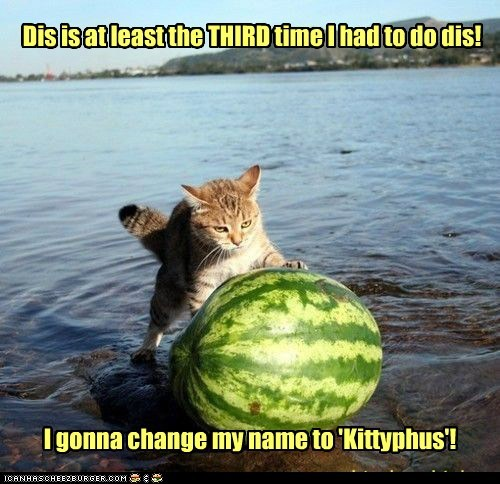 Dis is at least the THIRD time I had to do dis! I gonna change my name to 'Kittyphus'!