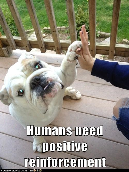 bulldog,dogs,high five,positive attitude,training