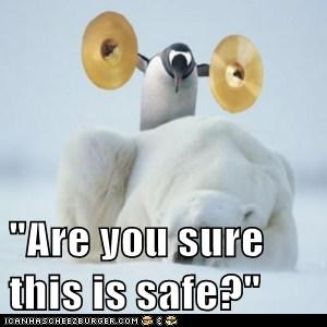 are you sure,crash,cymbals,dangerous,loud,penguin,polar bear,safe