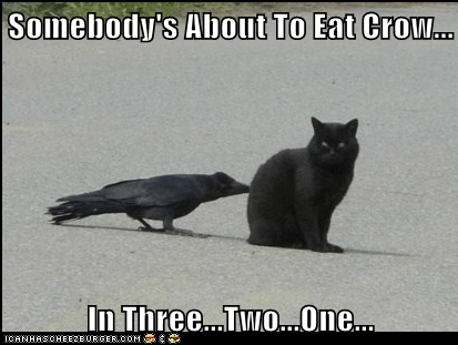 annoying,cat,countdown,crow,eat crow,food,pecking