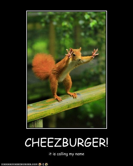 Cheezburger Image 6286496768