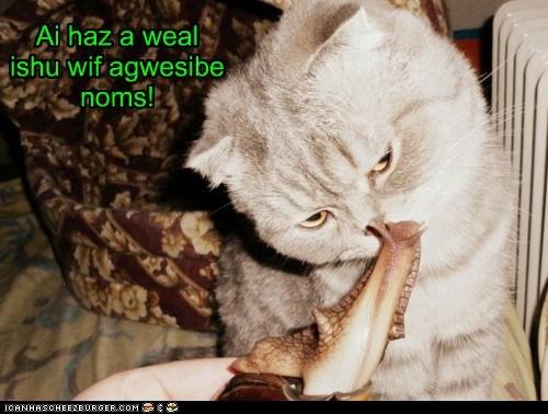Cheezburger Image 6286572032