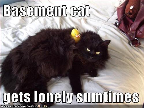 basement cat duck friend - 6286584576