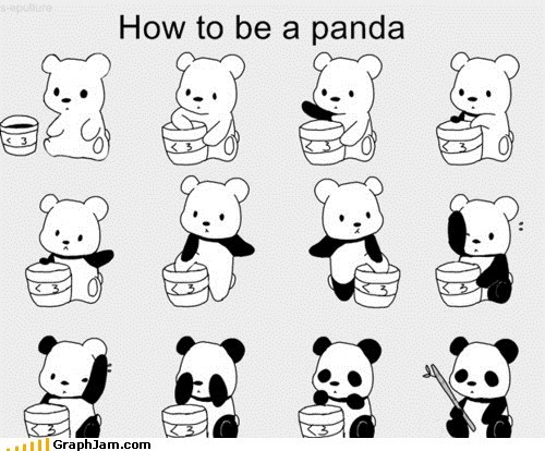 bear best of week How To panda - 6286587904