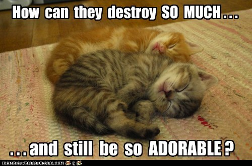 adorable ask Cats cute destroy kitten lolcats question sleep sleeping sleeping. squee