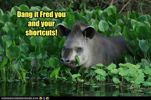 boar leaves shortcut water - 6286870016