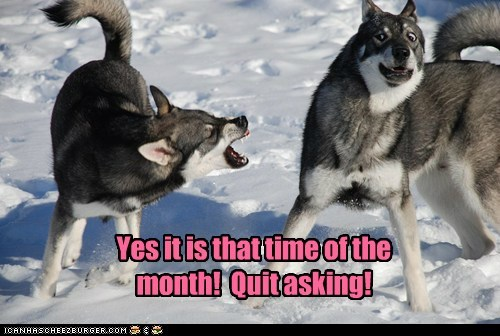 angry asking barking quit wolves - 6286875392