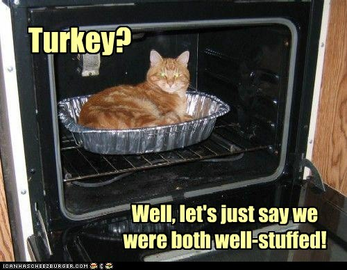 best of the week captions Cats food lolcats nom oven pun puns stuffed thanksgiving Turkey - 6286947840