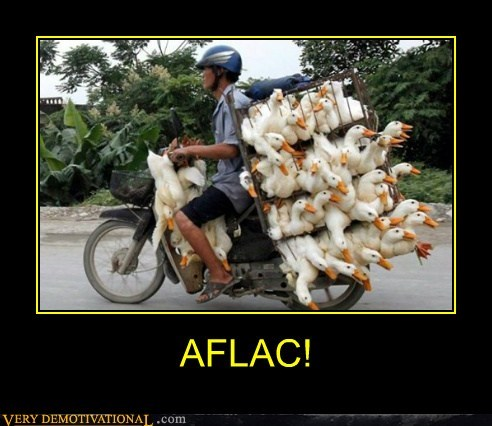 Aflac bike ducks geese hilarious - 6287018752