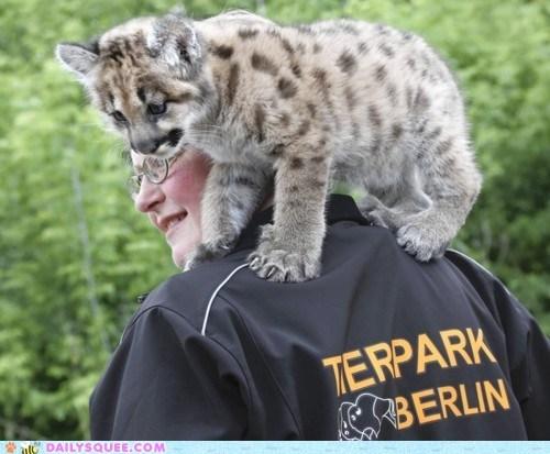 big cat claws ocelot piggy-back ride spots squee - 6287057408