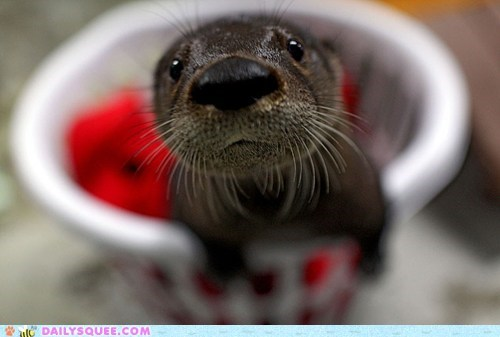 close up laundry basket otter squee whiskers - 6287063808
