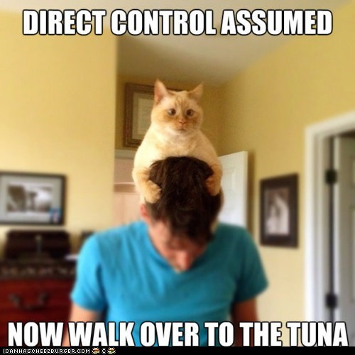 Cats control control cat controlling heads humans Memes tuna walk - 6287089152