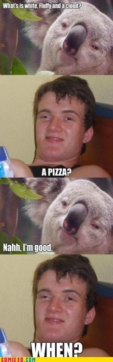 best of week koalas pizza stoner the internets