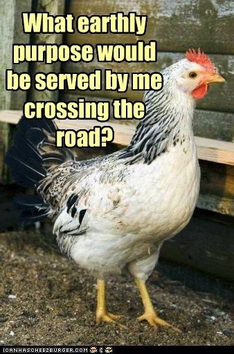 chicken,cross the road,window
