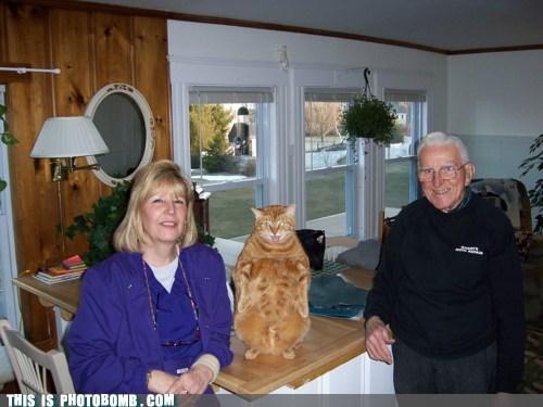 animal Animal Bomb cat taxidermy wassup wtf - 6287363328