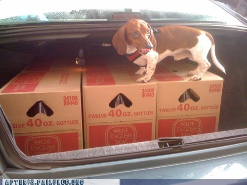 40 40 ounce 40 oz 40s beer cases of beer cc crunk critters dogs olde english puppy trunk trunk full of beer weiner dog - 6287372800