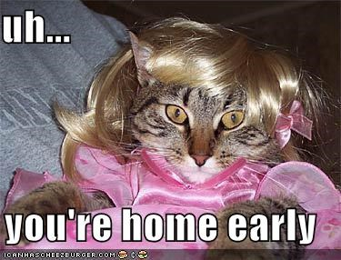 caught dress lolcats wig - 628740352