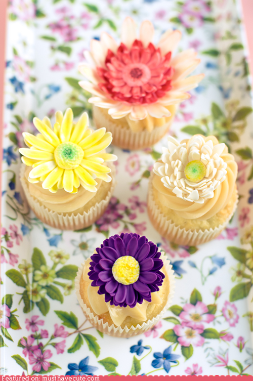 cupcakes,edible,epicute,flowers,gorgeous,sugar paste